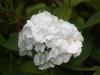 img_1999-flower-1